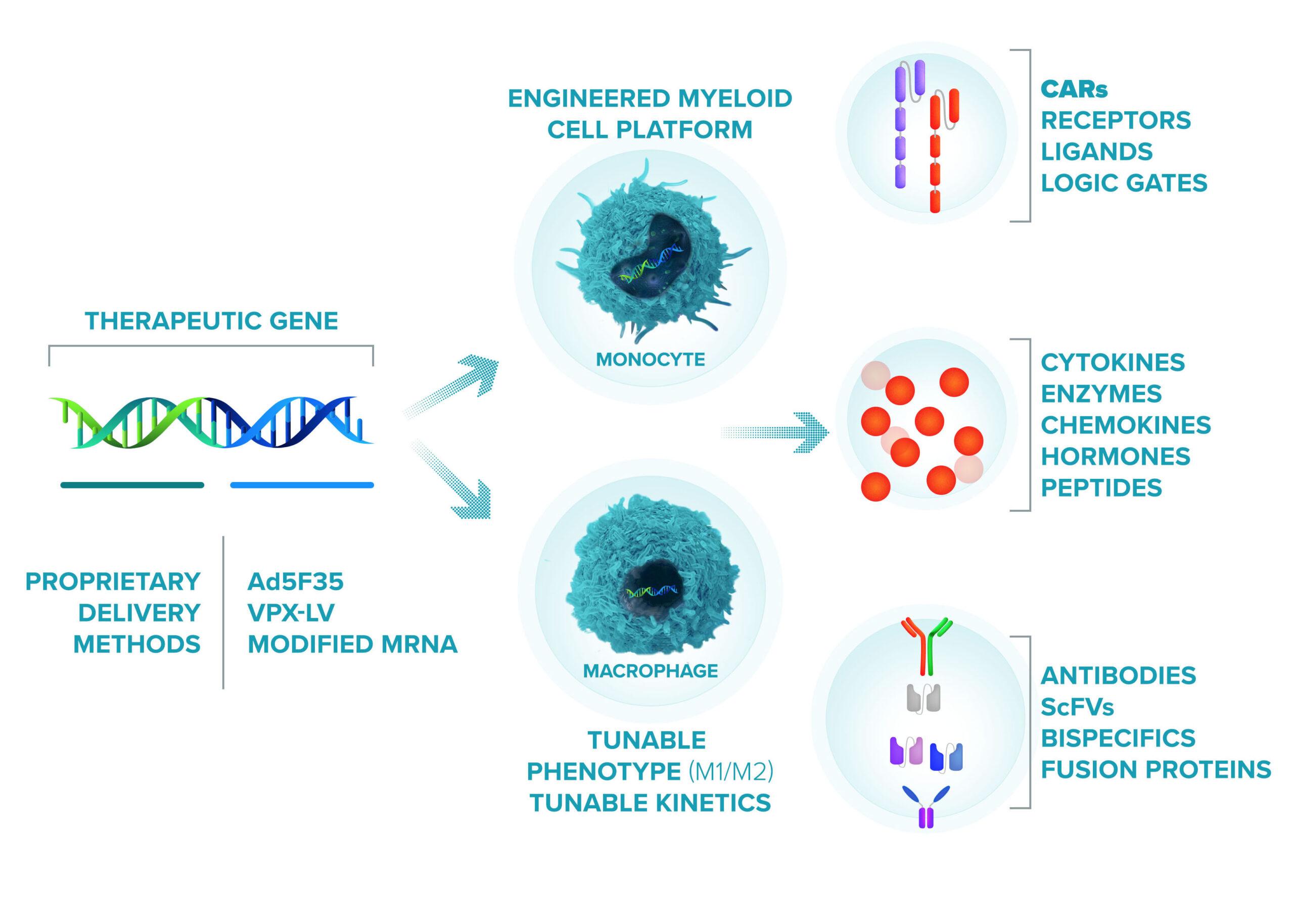 carisma-engineered-cell-platform